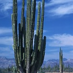 Fixed Cacti Spine 0.8.7g Problem on FreeBSD